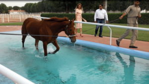 коні-шейха-ОАЕ